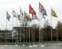 Swiss and Zug Municipalities Flags, Hirsgarten, Lake Zug, Cham ZG, Switzerland (jag9889) Tags: lake schweiz switzerland kayak suisse suiza swiss bad zug flags swans kayaking svizzera paddling steinhausen cham ch zg strandbad zugersee baar municipalities risch svizra walchwil untergeri obergeri lakezug neuheim menzingen hnenberg hirsgarten