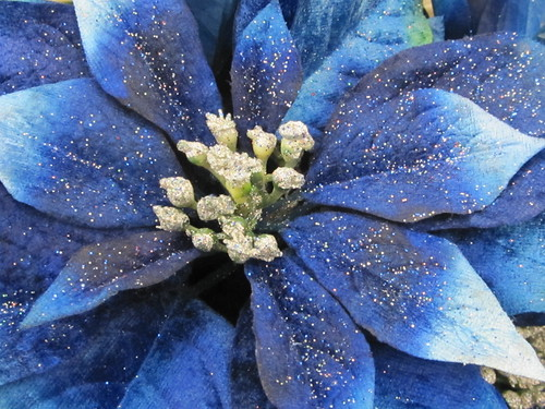 Blue Silk Poinsetta