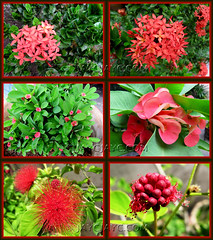 Collage of our tropical garden's flowering plants in November 2010