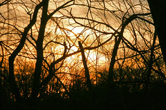 branches and gold