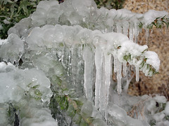 icicles (The Mucker) Tags: