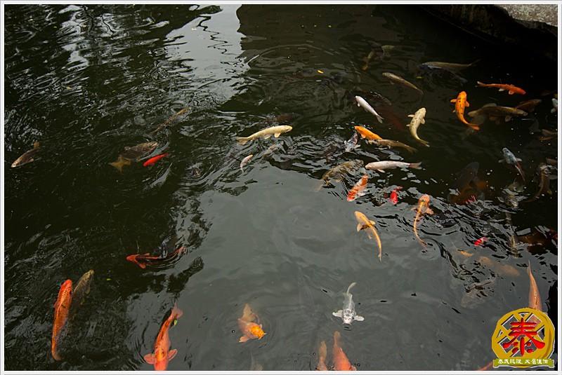 緣道觀音廟 (14)