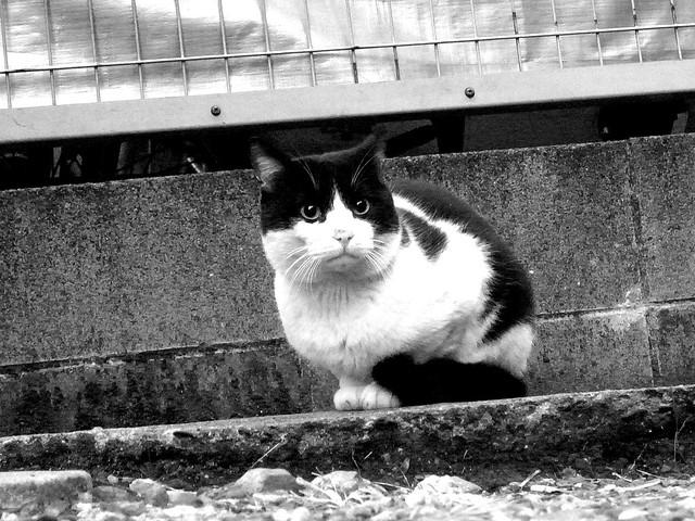 Today's Cat@2010-12-08