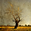 the tuning fork of the autumn (old&timer) Tags: bravo searchthebest colorphotoaward sailsevenseas