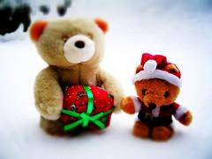 Bear Spotting Adventures December