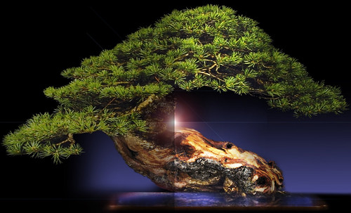 """Bonsai059 • <a style=""""font-size:0.8em;"""" href=""""http://www.flickr.com/photos/30735181@N00/5261940716/"""" target=""""_blank"""">View on Flickr</a>"""