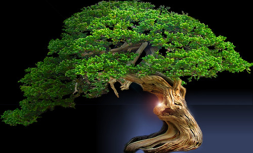 """Bonsai046 • <a style=""""font-size:0.8em;"""" href=""""http://www.flickr.com/photos/30735181@N00/5261944292/"""" target=""""_blank"""">View on Flickr</a>"""