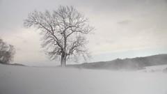 Blizzard (aswinchell) Tags: winter snow film dslr blizzard 5dmk2