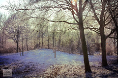 Today, Hope was Everywhere (Puur) Tags: trees winter snow cold holland ice nature frost december thenetherlands silence alongdecember puurphotography todayhopewaseveryhere