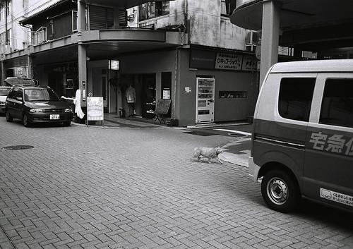 niigata monochrome film 14