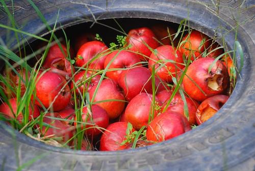 Pelion Peninsula apples