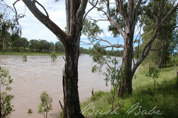 flood_0572