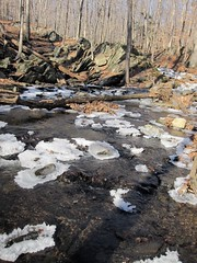 IMG_6114 (Ellen Bulger) Tags: winter ice nature woods connecticut woodbridge wepawaugriver