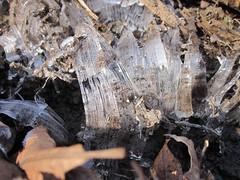 IMG_5994 (Ellen Bulger) Tags: winter ice nature woods connecticut woodbridge wepawaugriver
