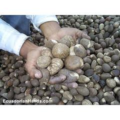 abalorios de tagua
