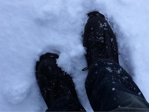 積雪にダナーライト