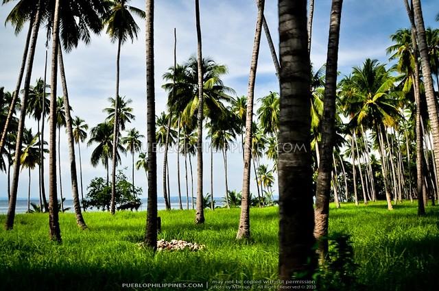 Talikud Island - Samal City 10-10 (633)