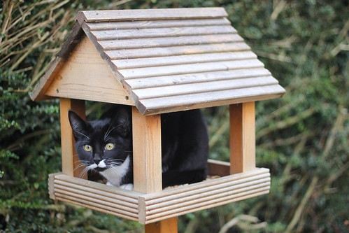 The cat in the (bird)house (2)