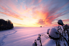 into the light (Youronas) Tags: wood pink schnee light red sky orange plants sun sunlight snow cold tree ice nature clouds forest sunrise canon germany landscape bayern deutschland bavaria licht frost december dusk natur spuren traces himmel wolken frosty franconia sunflowers 7d dmmerung franken kalt eis landschaft sonne wald sonnenaufgang daybreak flur frostig sonnenblumen morgendmmerung sonnenlicht 1585 fusspuren