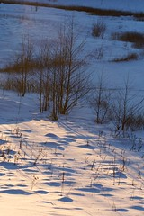 Winter shadows (Ingwii) Tags: vinter januar asker 2011 semsvann