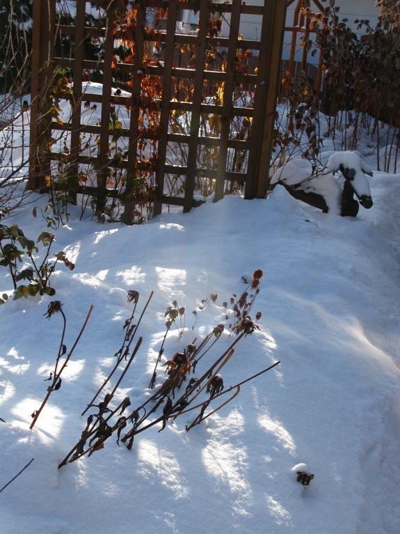 edmonton snow 002