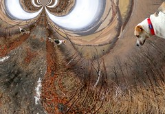 Bella's Vision Quest - 3 (phobexyz) Tags: trip cliff dog ontario nature burlington out other collie lab mt nemo hiking walk hill border orb warp warped hike next hills mount photograph sphere fields bella trippy dimension stroll circular spheroid ont tripping on tripped campbellville
