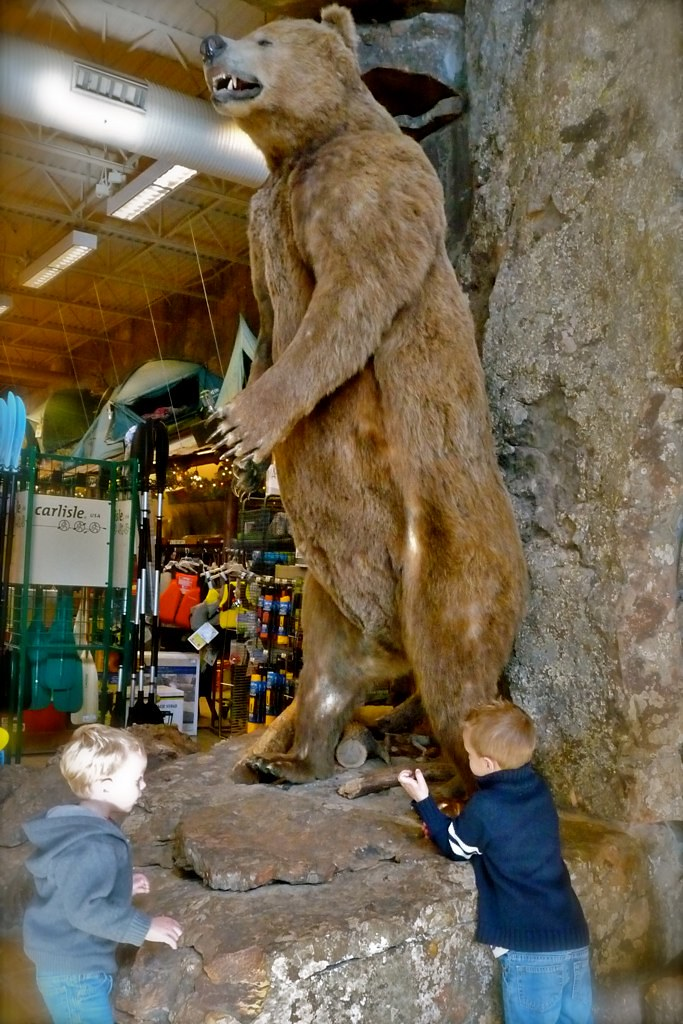 Touch-A- BEAR! At Bass Pro Shops