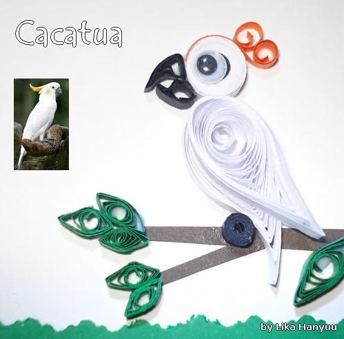 Cacatua