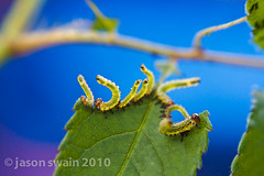 Lensbaby Caterpillar Party Time #1 (s0ulsurfing) Tags: lighting blue light summer blur macro green eye nature up le