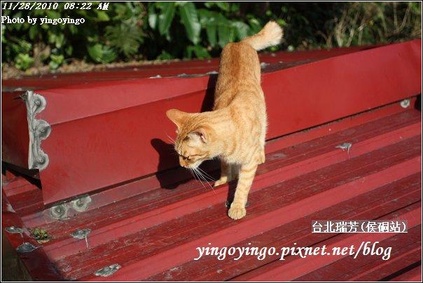 台北瑞芳(侯硐站)貓村20101128_I5589