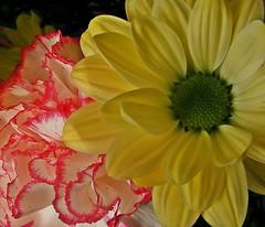 Love Flowers. (George MJ) Tags: amateurs flickraddicts flowersset flowercloseups perfectpetals closeupsandmacros fabulousflowers selftaughtphotographers allflowers greatflowermacros anawesomecloseupnopeople finepixs5700users flickrflowermacros macroflowerlovers flickrsawesomeblossoms ohnonotanotherflower crabaward onlyflowers flickrglobal myfavouritemacro ukphotogallery coloremotion fujifilmfinepixusers