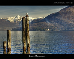 il posto migliore (Ticino-Joana) Tags: italien italy italia seagull piemonte möwe gabbiano lagomaggiore piemont cannobio