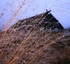 Rigning (Sivva) Tags: winter wild plants macro planta nature water weather closeup iceland north clear gras nordic reykjavík náttúra garður kirkja icelandic vetur hús vatn gamalt rigning safn kvöld torf bær veður árbæjarsafn gamli dropi regndropar dropar torfbær fókus tíminn sivva nálagt