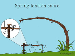 spring tention snare. (fishfish_01) Tags: rabbit traps survival trap snare poaching poach snares trapping bushcraft