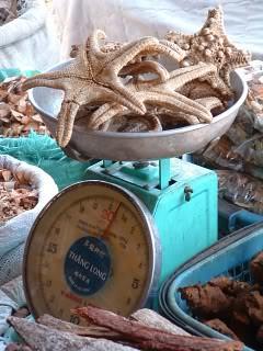 dried starfish, Siem Reap market