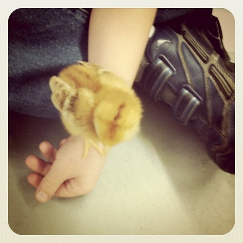 I went and surprised my son at his farm fieldtrip. Look at the baby chick.