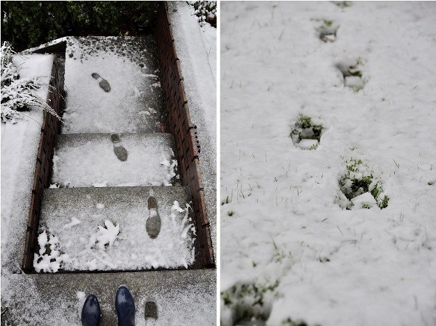snow footprints double