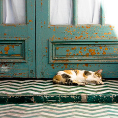 Kitty! (MastaBaba) Tags: door green cat nap floor sleep morocco marrakech marrakesh naptime 20110101
