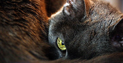 Peeper Eye (pamramsey) Tags: cat challenge bigmomma twitter 15challengeswinner