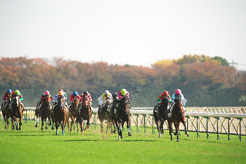 Race in Autumn