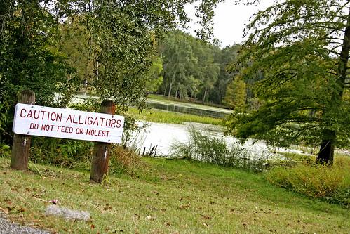 'Gator Warning