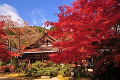 -- (Jennifer ) Tags: autumn red green fall nature colors yellow japan zeiss temple kyoto carl  sakura      carlzeiss zf  oohara   nikond700   distagont2821  zeisscontest2010