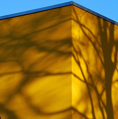 branches on the wall (montel7) Tags: muro yellow wall shadows branches ombre giallo rami creattivit