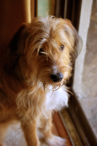 Ollie waits