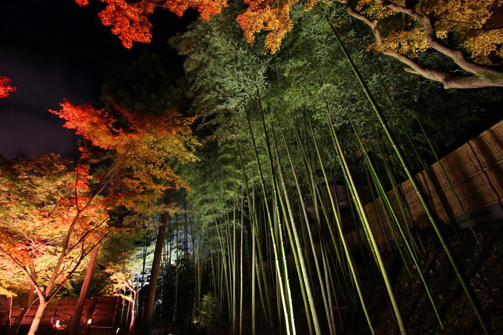 Kitanotenmangu Red Leaf Lightup 2010 (7)