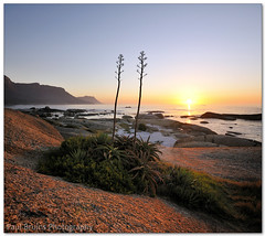 Maiden's Cove Succulent Sunset (Panorama Paul) Tags: sunset succulents aloes maidenscove nohdr sigmalenses nikfilters vertorama nikond300 wwwpaulbruinscoza paulbruinsphotography