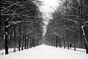 Υ.Υ.Υ.....Υ.Υ.Υ (...storrao...) Tags: trees blackandwhite bw snow berlin germany garden deutschland nikon pb mitte pretoebranco tiergarten week50 d90 project52 storrao sofiatorrão nikond90bw