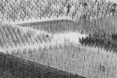 orchard-mishmash