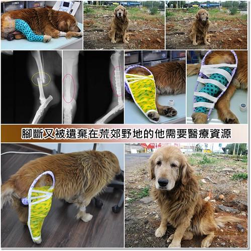 「推一下」台北斷腳又被遺棄在荒郊野外的黃金獵犬弟弟~目前醫治中~懇請贊助醫療資源,也徵助認養喔~謝謝您!20101214