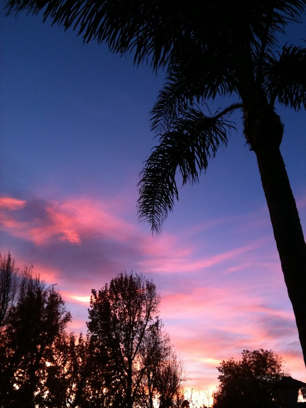 los angeles sunset+pink sunset and palm tree